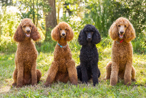 Bea, Bruno, Indy & Skye