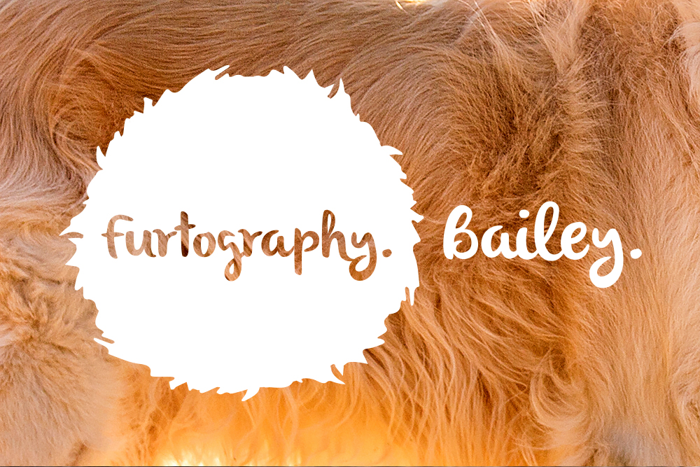 Bailey | New Zealand Dog Photographer