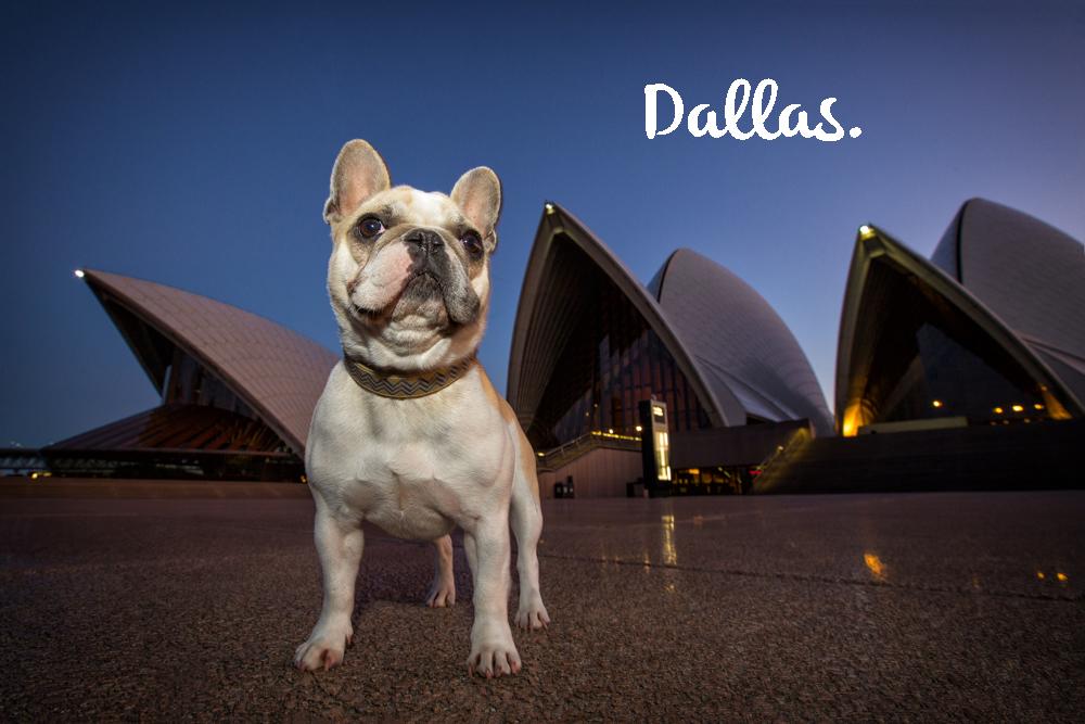 Dallas | Dog Photography in Sydney