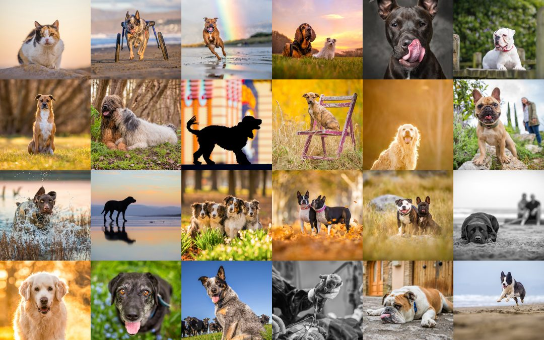 2016, a pretty good year really! | Professional Pet Photography