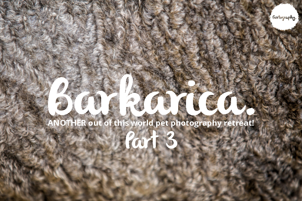 Barkarica | Furtography goes to Costa Rica Part 3