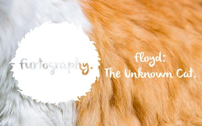 Floyd: The Unknown Cat | Quake Cats