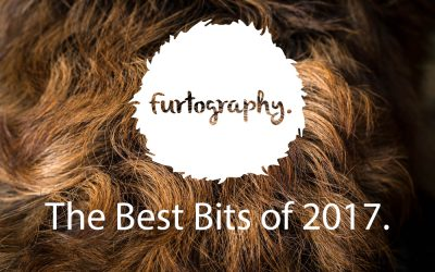 The Best Bits of 2017 | New Zealand Dog Photographer
