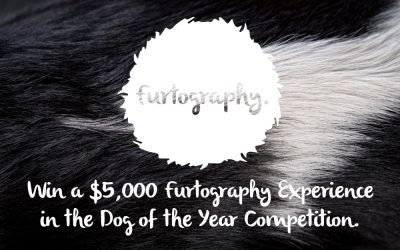 Dog of the Year Competition