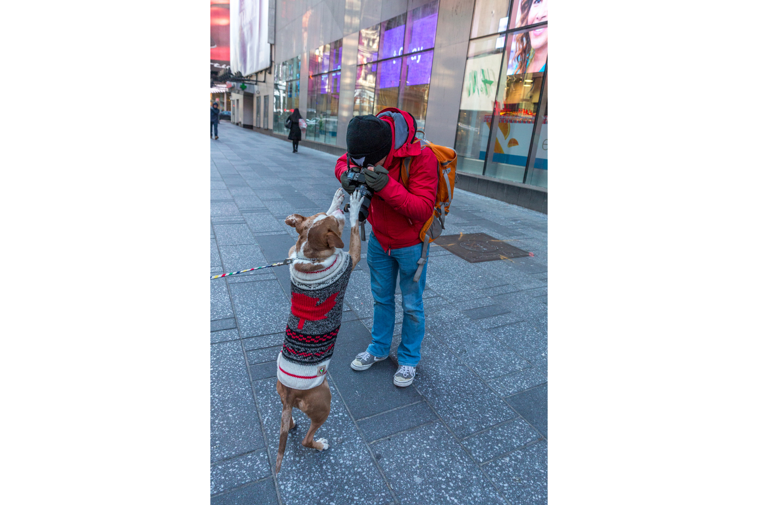 NYC Dogs - Behind the Scene3