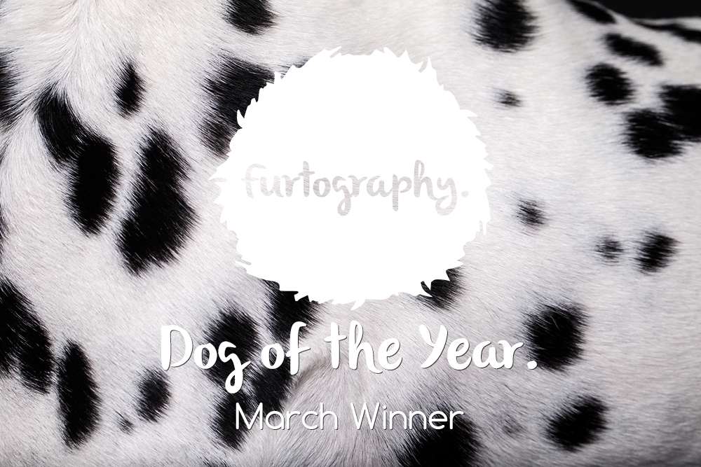 Dog of the Year – March Winner