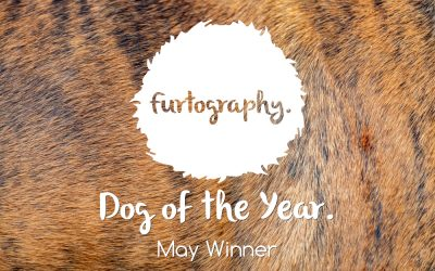 Dog of the Year – May Winner.