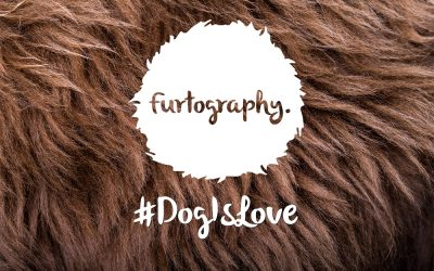 #DogIsLove. All love is pawfect – canine nuptial photos illustrate the value of love in all its shapes and sizes.