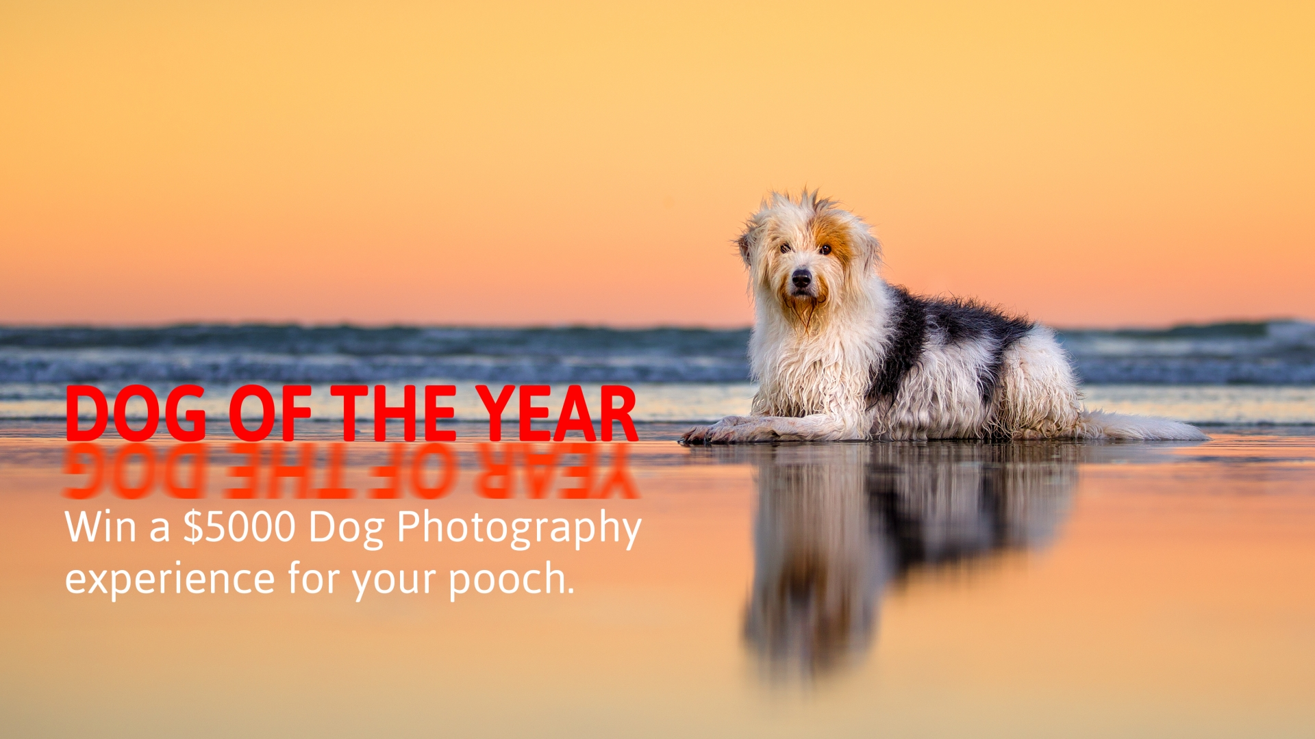 02 Dog of the year competition