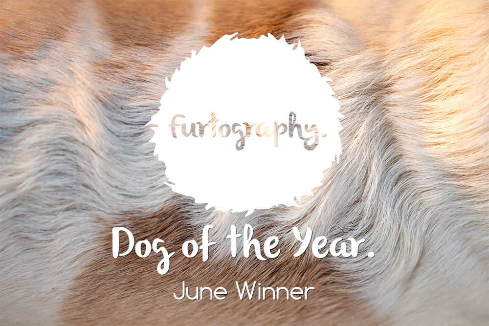 Dog of the Year winner – June