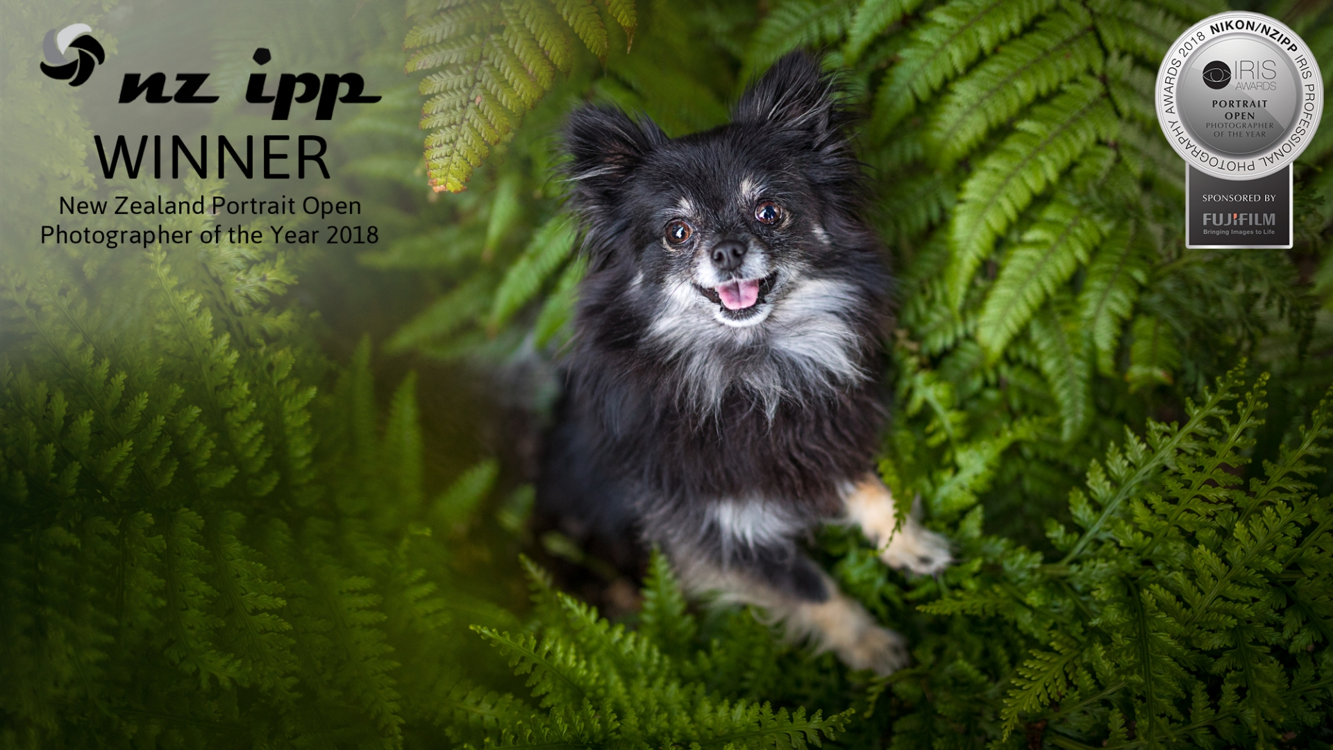 04 Chihuahua Portrait Photographer of the Year fern