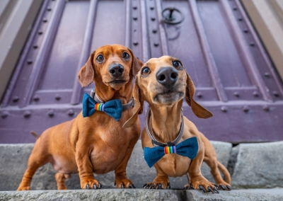04-WInners-Circle-Sessions-urban-dachshund-couple