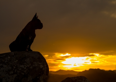 07-Winners-Circle-Sessions-Hills-french-bulldog-silhouette