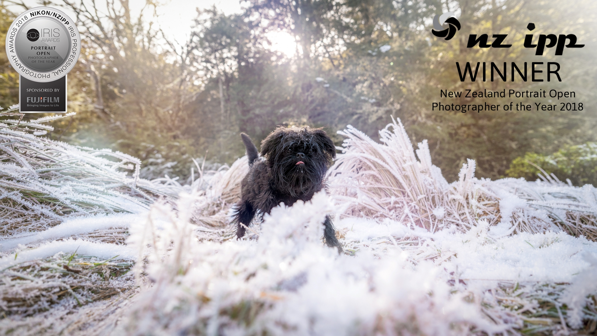 08 Portrait Photographer of the Year hoar frost affenpinscher