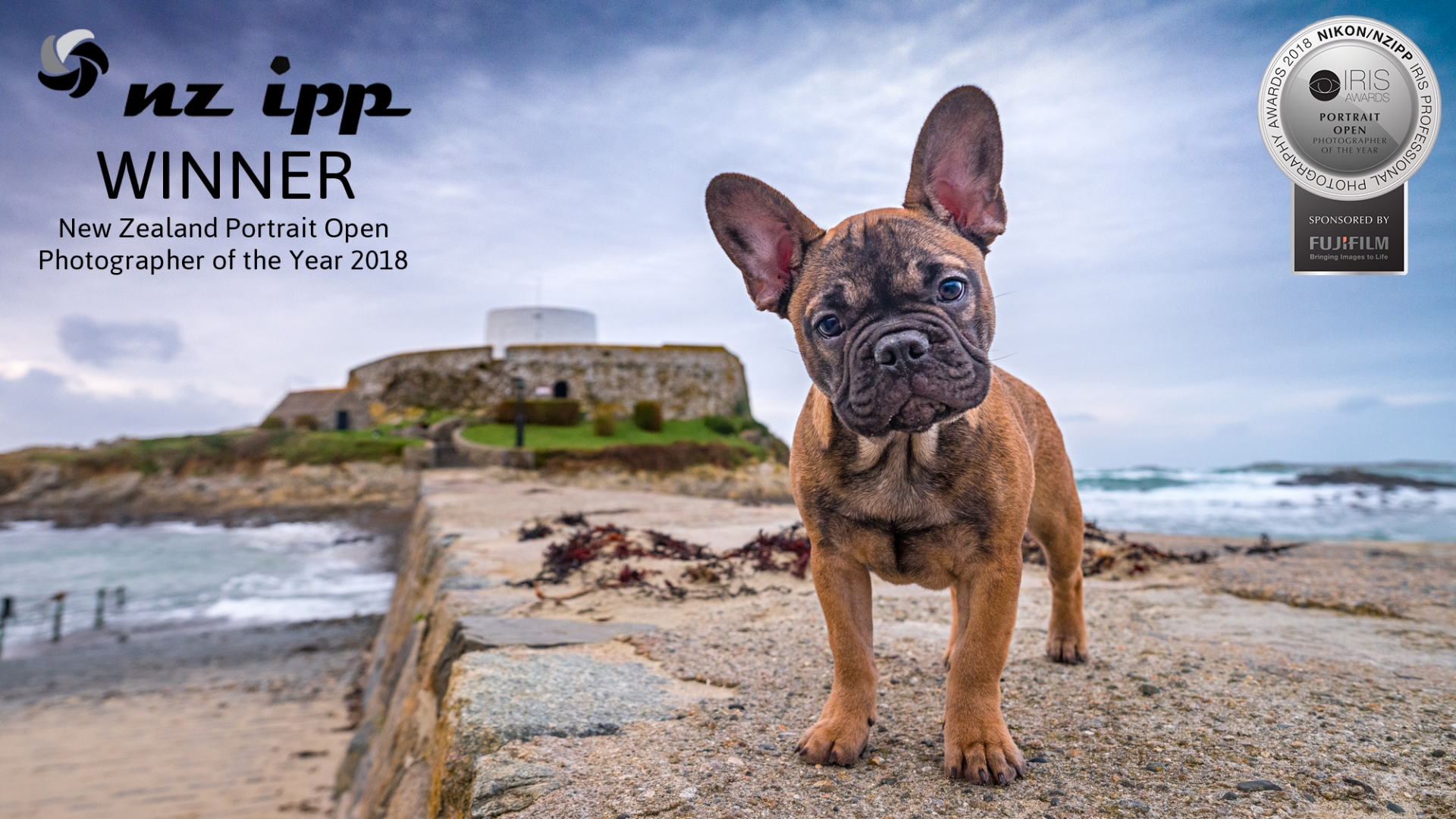09 Portrait Photographer of the Year French bulldog guernsey fory grey cup saucer