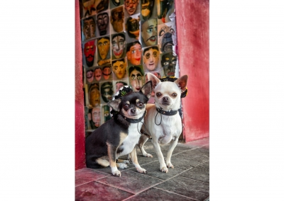 09-WInners-Circle-Sessions-urban-mexican-chihuahua-pair