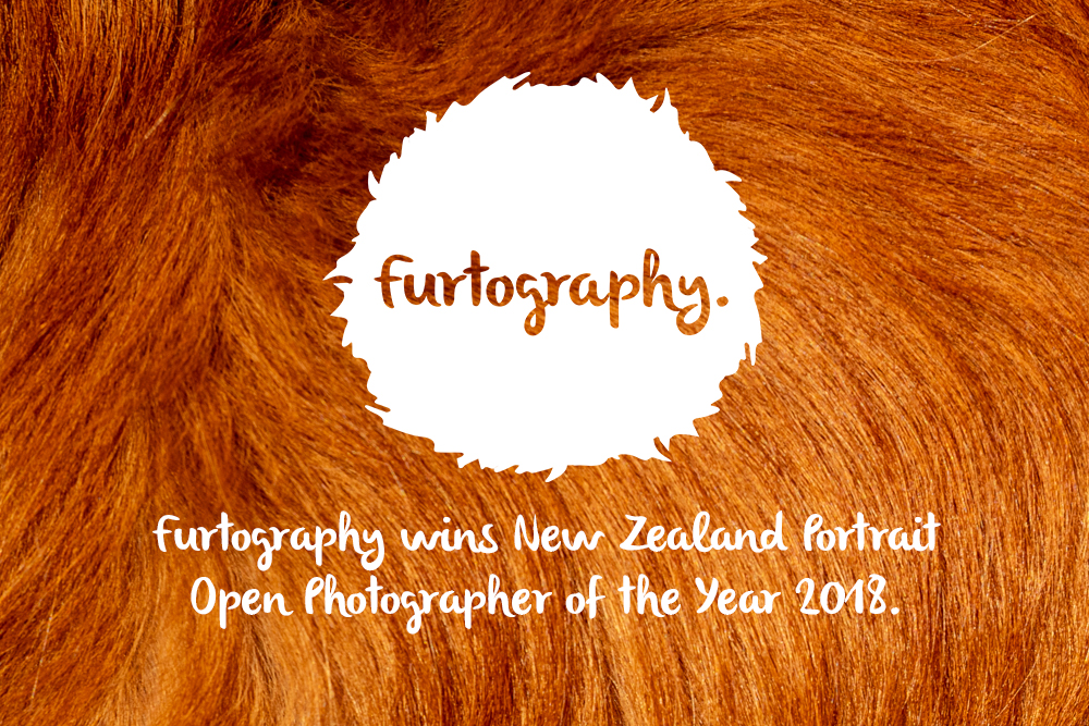 Furtography is the NZIPP/Nikon Iris Awards New Zealand Portrait Open Photographer of the Year!