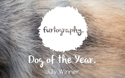 Furtography Dog of the Year – August Winner