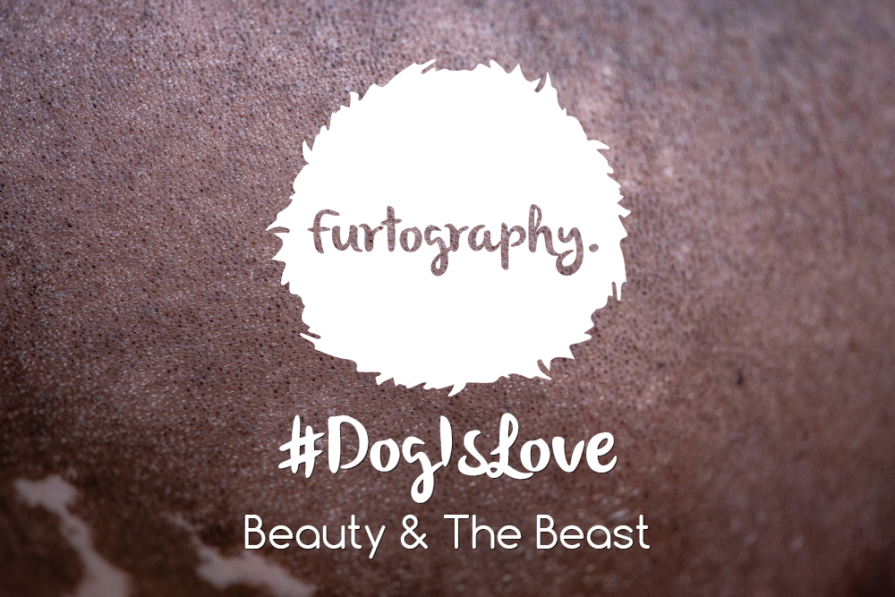 #DogIsLove – Beauty and the Beast