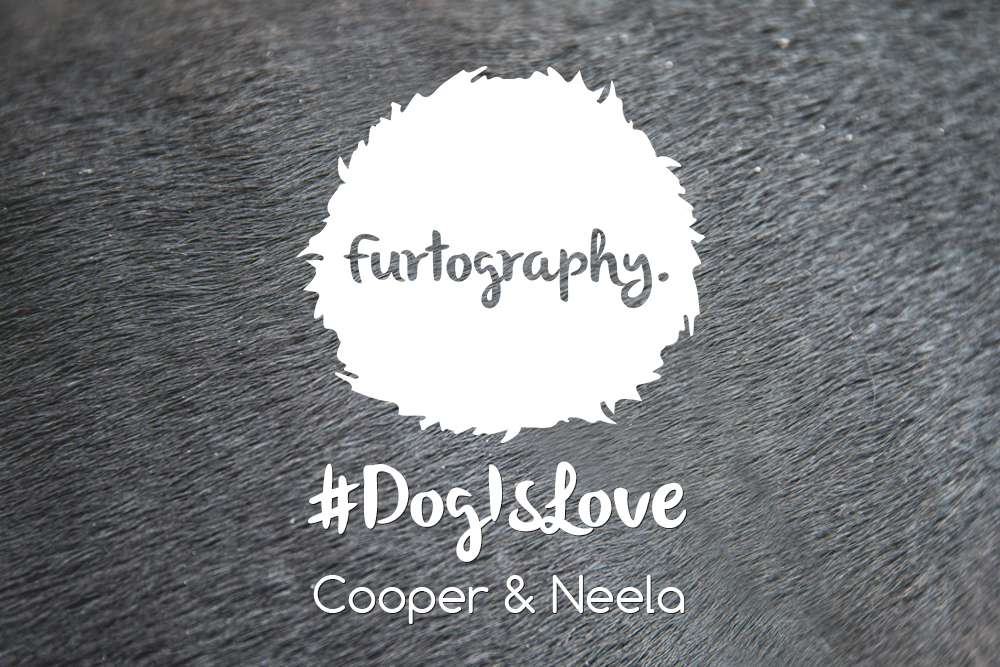 #DogIsLove – Cooper and Neela
