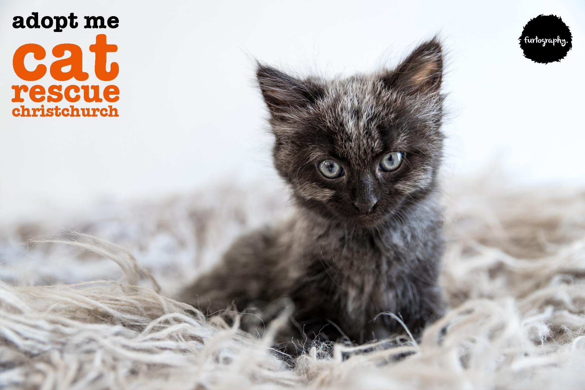 Kitten_1-001