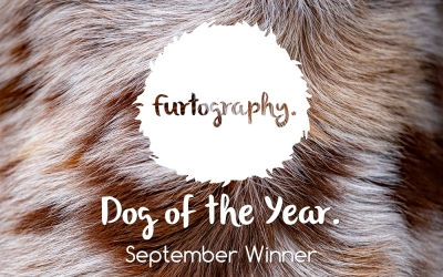 Dog of the Year – September Winner
