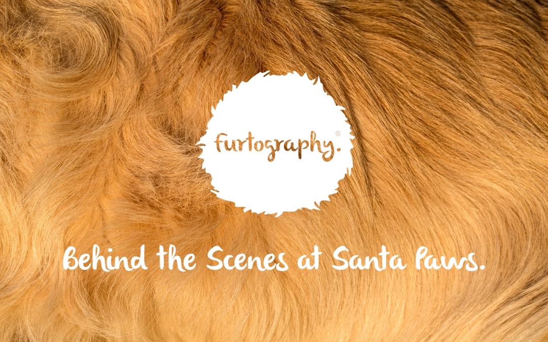 Behind the Scenes at Santa Paws