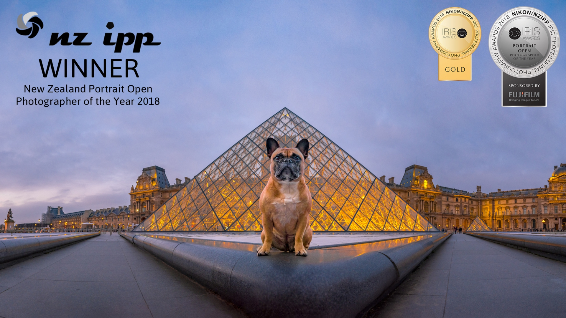 01 Paris Frenchie Portrait Photographer of the year Iris gold nzipp
