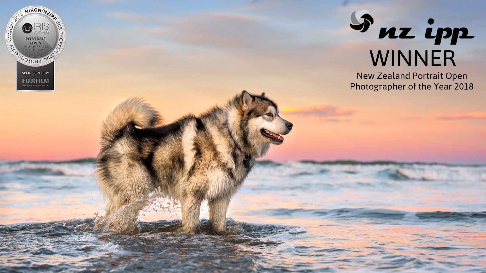 03 Malamute Portrait Photographer of the Year Beach sunset