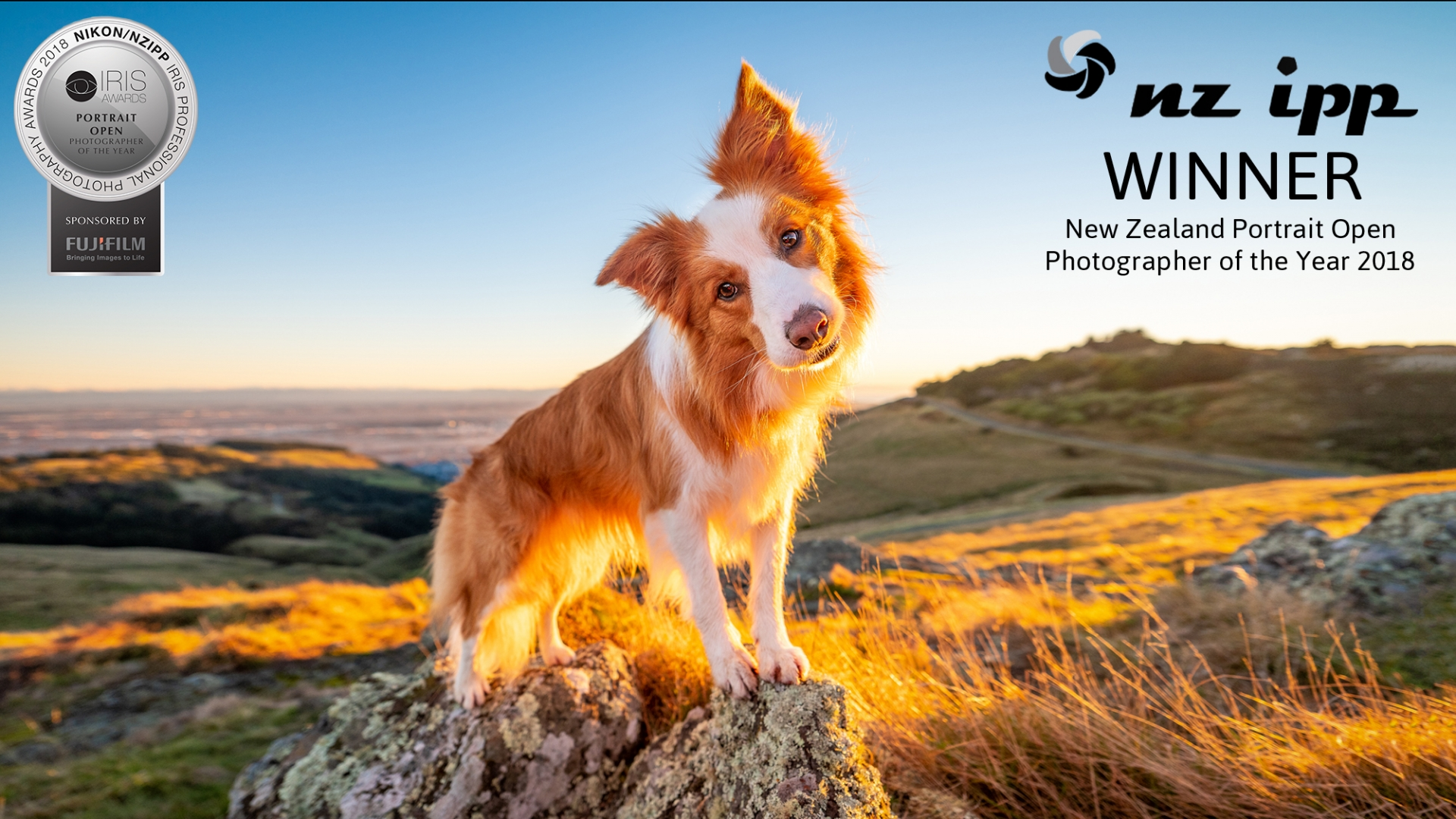 05 border collie Portrait Photographer of the Year port hills