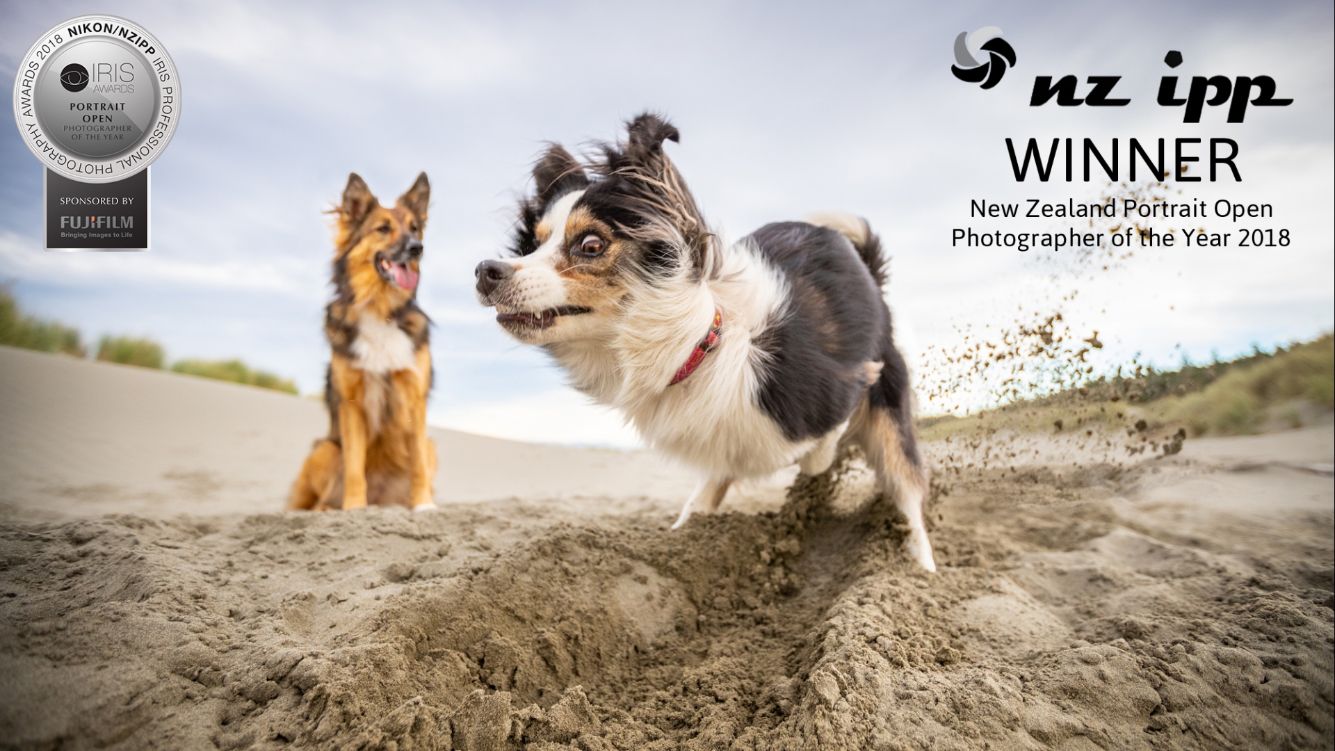 06 Portrait Photographer of the Year dogs digging