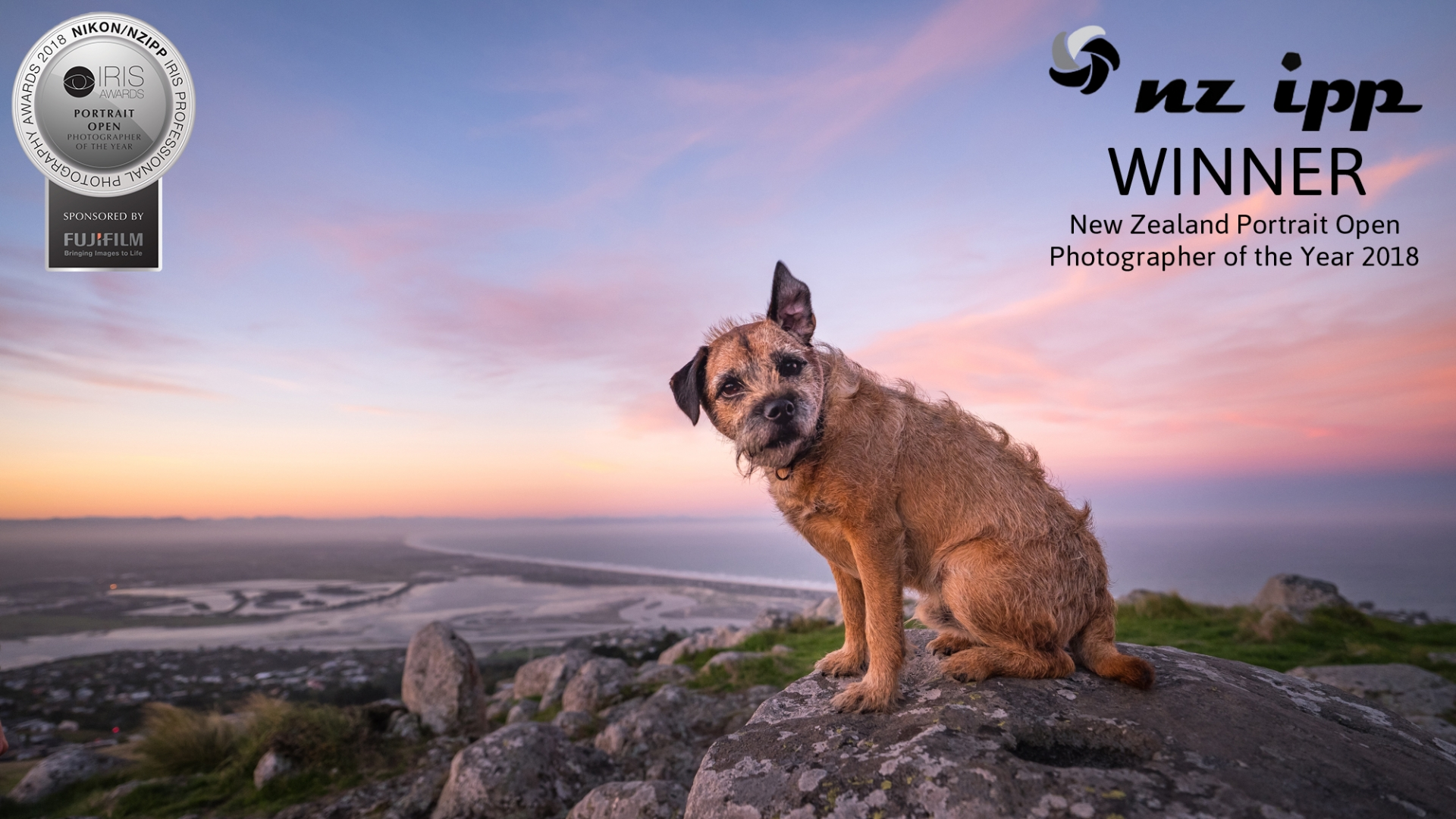 11 Portrait Photographer of the Year border terrier john britten reserve