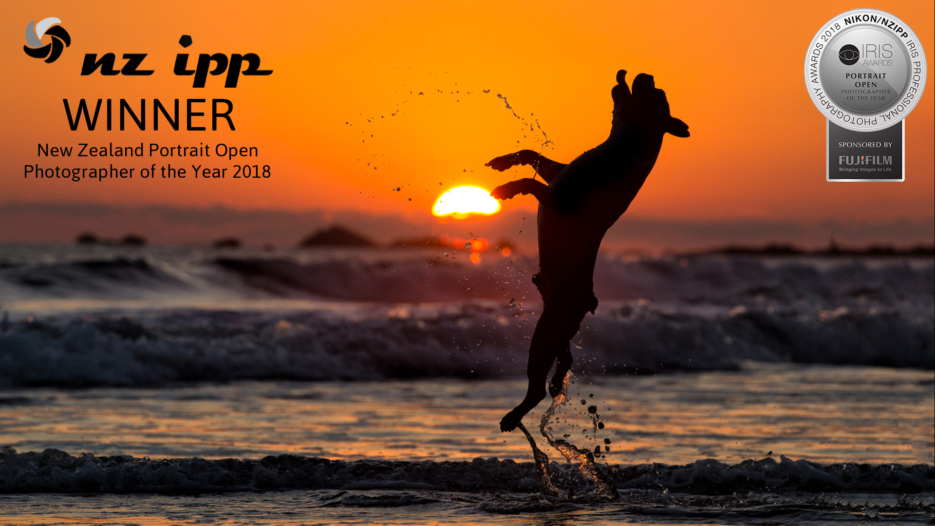 12 boston terrier Portrait Photographer of the Year jumping sunset silhouette costa rica